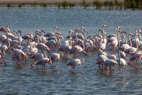 Dubai attractions - Ras al Khor wildlife sanctuary