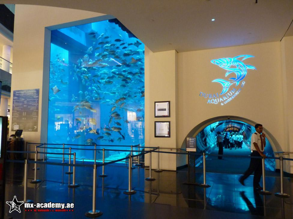 Things to do in Dubai - The Fountain & Dubai Aquarium at Dubai Mall